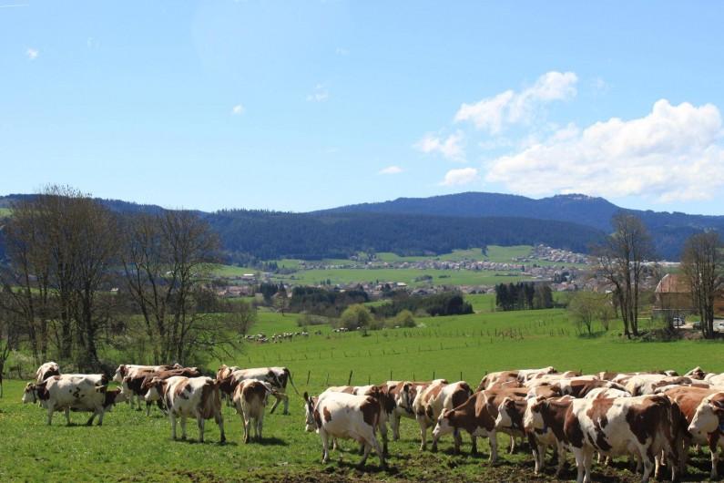 Location de vacances - Gîte à Les Fins - troupeau de vaches