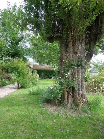 Location de vacances - Chambre d'hôtes à Saint-Loup-de-Naud - Paul's Himalayan Musk part à l'assaut du peuplier