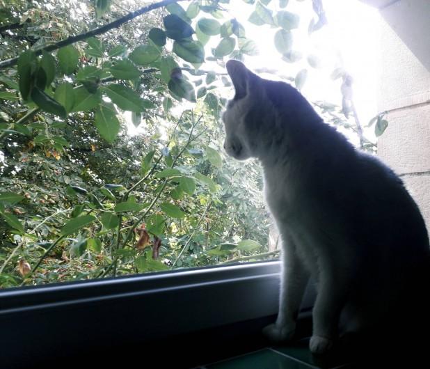Location de vacances - Gîte à Lendou-en-Quercy - Un de nos chats
