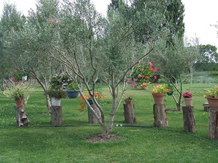 Location de vacances - Appartement à La Cadière-d'Azur - espace foret d'olivier