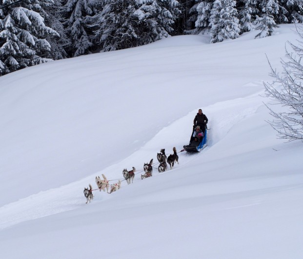 Location de vacances - Chalet à La Pesse - Ballade à  chien de traîneau