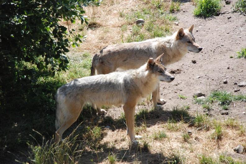 Location de vacances - Chalet à Blavignac - Au pays de la Bête! Le parc des Loups du GEVAUDAN
