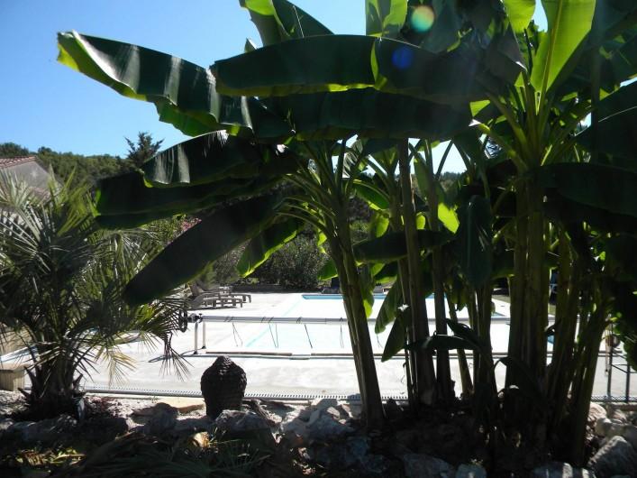 Location de vacances - Chambre d'hôtes à Castelnau-de-Montmiral - parmi le palmier