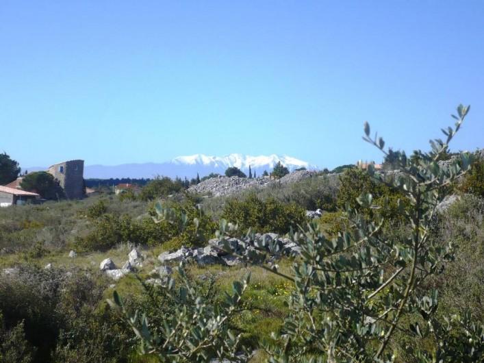 Location de vacances - Maison - Villa à Opoul-Périllos - vue sur le Canigou à 100 m au dessus de la maison