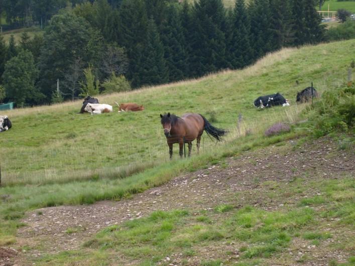 Location de vacances - Chalet à Saint-Maurice-sur-Moselle - Nos Voisins les Chevaux dans leur pature