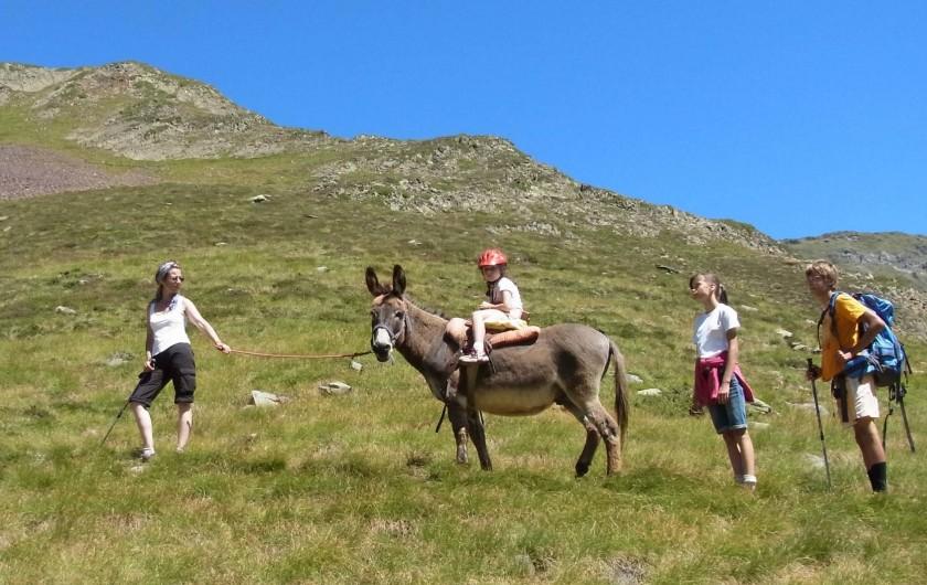 Location de vacances - Gîte à Arrens-Marsous - Une balade avec des ânes
