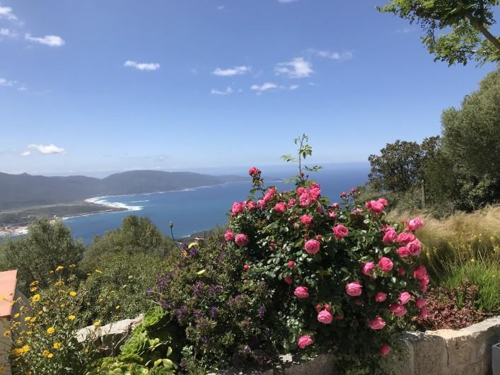 Location de vacances - Villa à Olmeto - Floraison Mai
