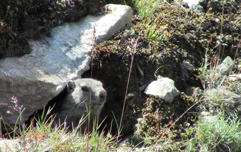 Location de vacances - Appartement à Valloire - Belles rencontres avec divers animaux de la montagne