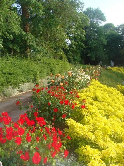 Location de vacances - Gîte à Arromanches-les-Bains - Rosiers