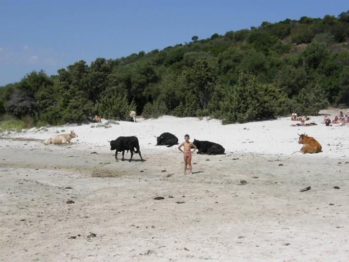 Location de vacances - Maison - Villa à Oletta - La plage de saleccia avec sa faune sauvage