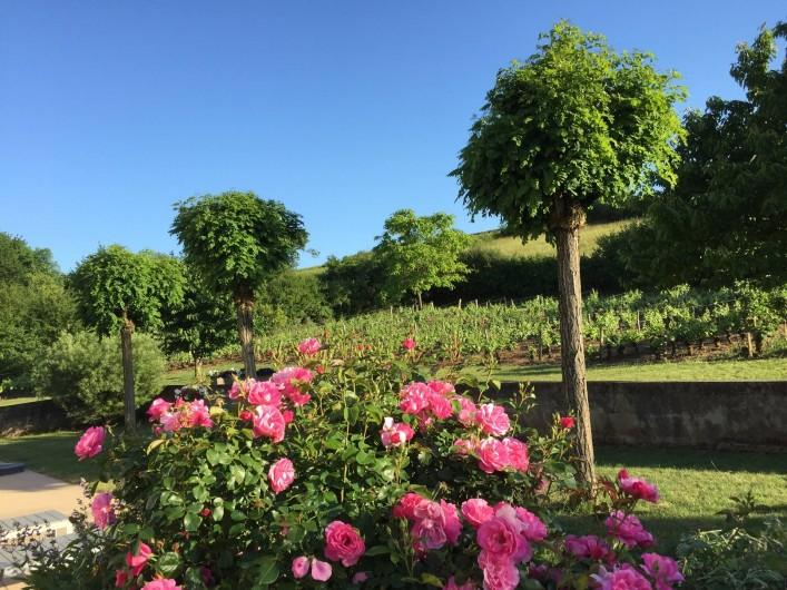 Location de vacances - Maison - Villa à Paris-l'Hôpital - Vue sur la vigne de notre terrasse