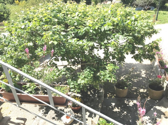 Location de vacances - Appartement à Chanaz - Terrasse