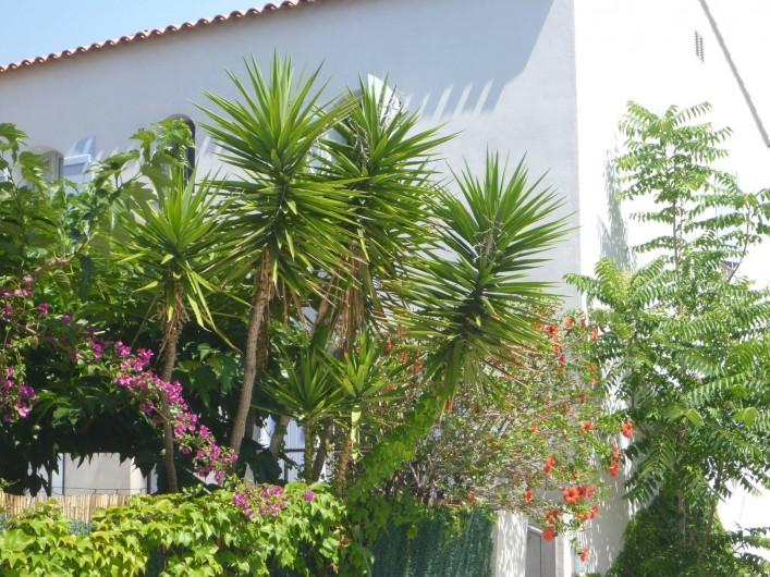 Location de vacances - Villa à Calvi - Jardin fleuri.