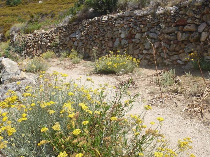 Location de vacances - Villa à Calvi - Rando à Lumio, village de Leaticia Casta.