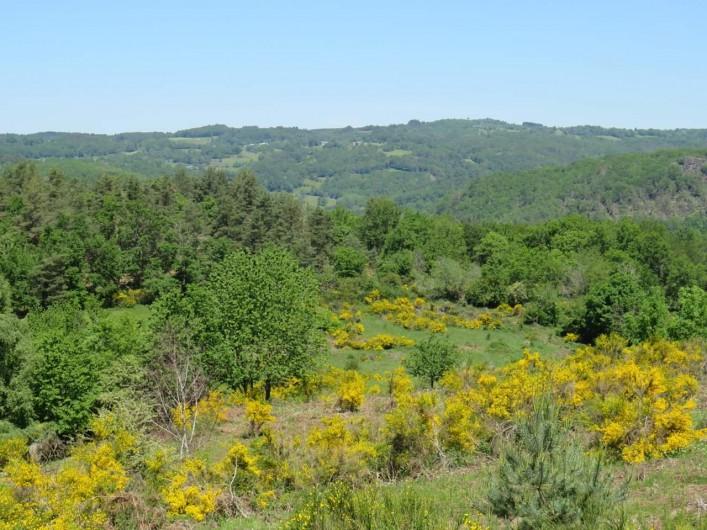 Location de vacances - Villa à Valuéjols - Genets en fleur en juin