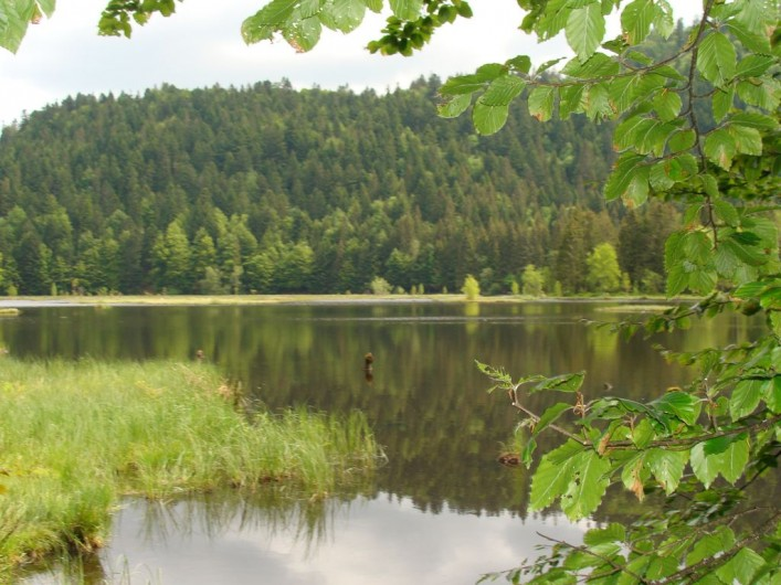Location de vacances - Chalet à La Bresse - Tourbière de Lispach