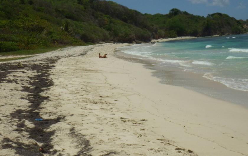 Location de vacances - Villa à Sainte-Anne - la plage en dessous de la villa