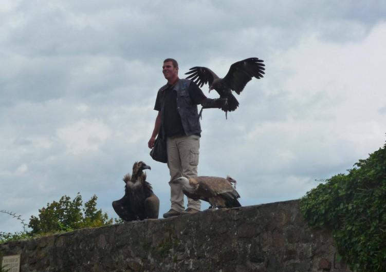 Location de vacances - Gîte à Kintzheim - Voleries  des aigles