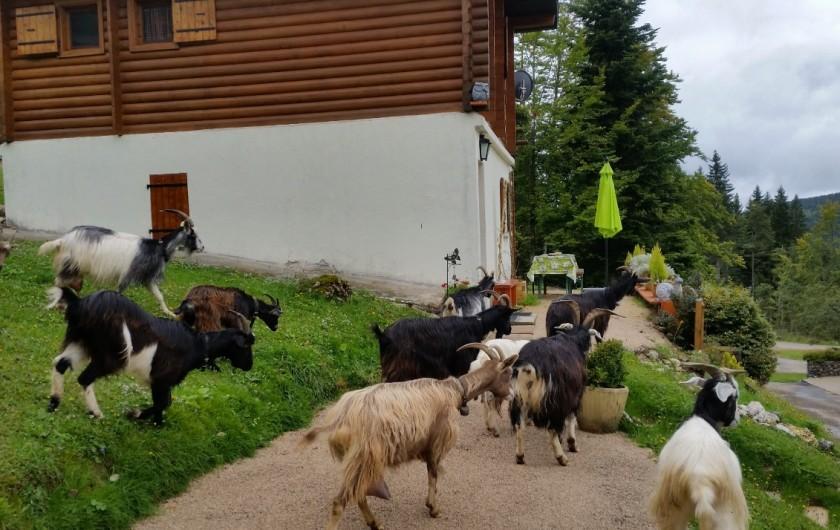 Location de vacances - Chalet à Prémanon - NOS VOISINES