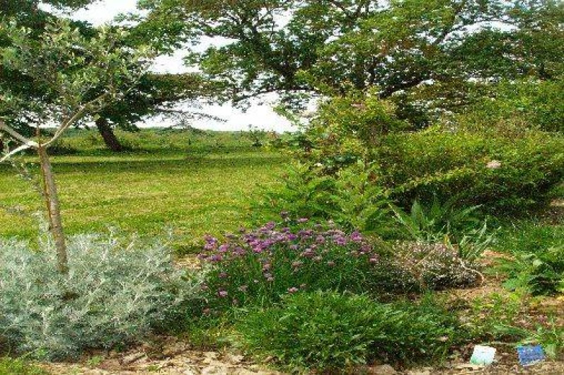 Location de vacances - Maison - Villa à Mirannes - Jardin