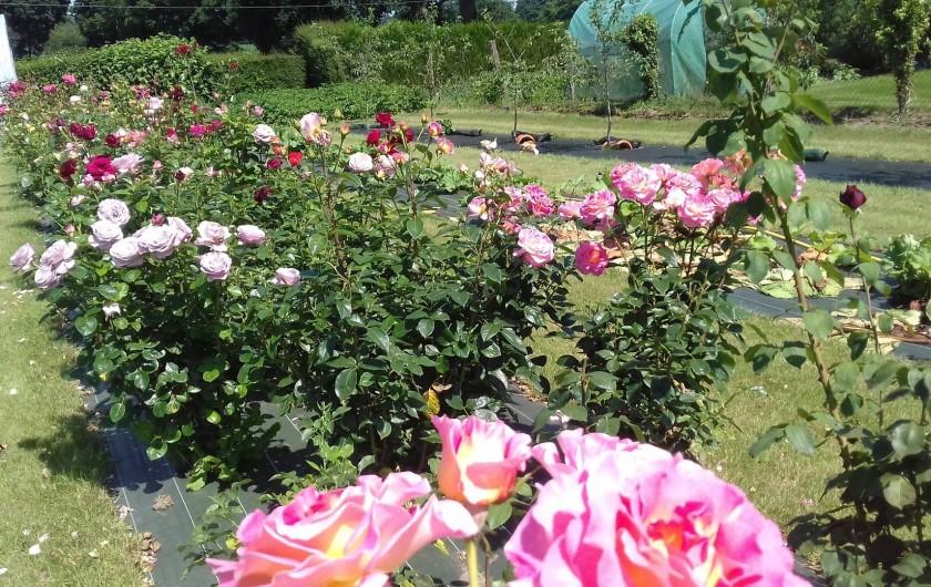 Location de vacances - Maison - Villa à Pontorson - La roseraie