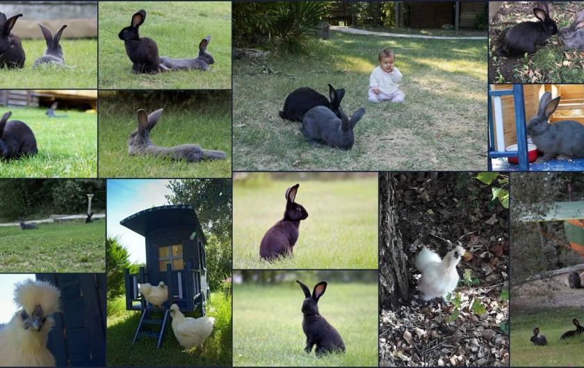 Location de vacances - Yourte à Barjac - Micro ferme avec poules et lapins en liberté dans le terrain