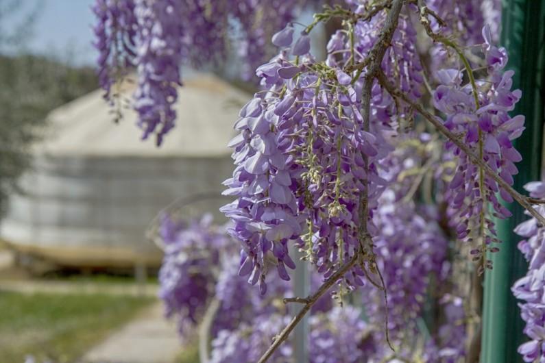 Location de vacances - Yourte à Barjac - Grand lit rond de 2.50 m de diamètre pour 2 à 4 pers