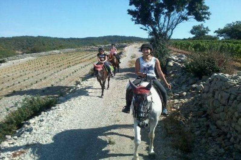 Location de vacances - Gîte à Saint-Maurice-d'Ibie - Balade à cheval dans les vignes