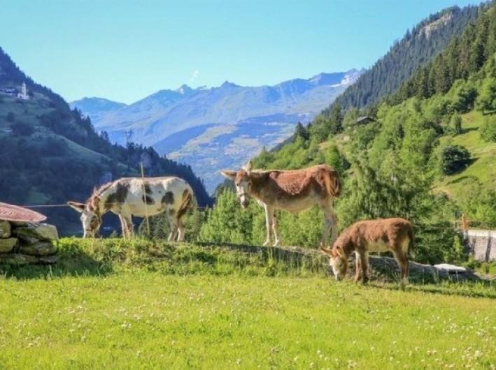 Location de vacances - Chalet à Sainte-Foy-Tarentaise - Les ânes du Chalet des Anges