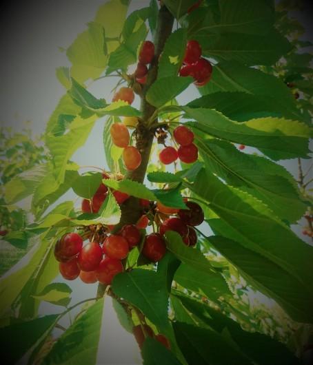 """Location de vacances - Gîte à Orgon - Le logement s'appelle """"le cerisier"""""""