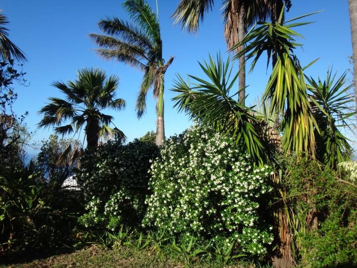 Location de vacances - Villa à Les Avirons - le jardin avec les lataniers