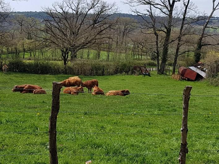 Location de vacances - Gîte à Lassouts - Nos vaches...Bio