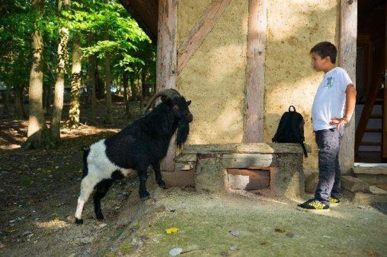 Location de vacances - Gîte à Crisolles - Une petite visite du voisin!