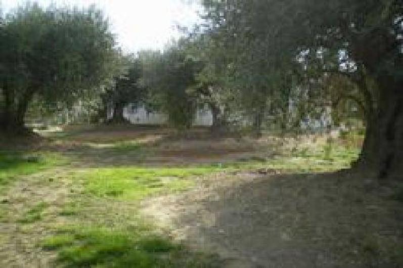 Location de vacances - Villa à Cazouls-lès-Béziers - Coté nord , les oliviers  tri-centenaires et les cigales.