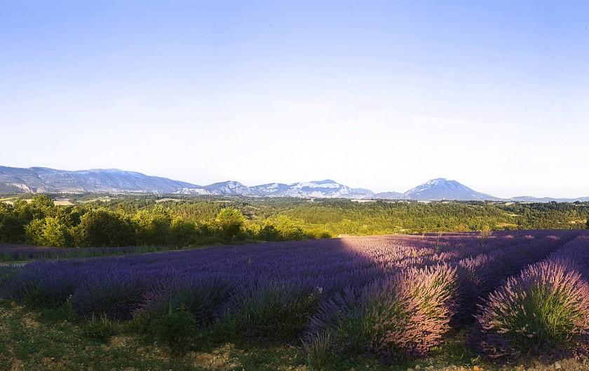Location de vacances - Chambre d'hôtes à Riez - le fameux plateau de valensole et ses lavandes