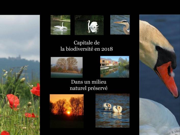 Location de vacances - Gîte à Muttersholtz - Capitale de la Biodiversité 2017