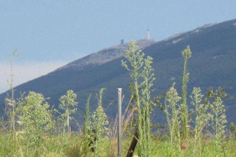 Location de vacances - Villa à Malaucène - Vue du Ventoux depuis le haut du plateau de la propriété.