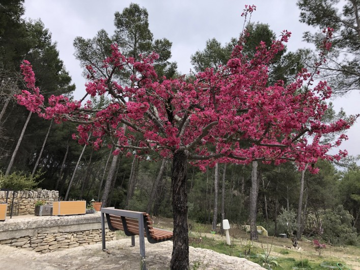 Location de vacances - Gîte à Pernes-les-Fontaines - Le véritable pommier du Japon