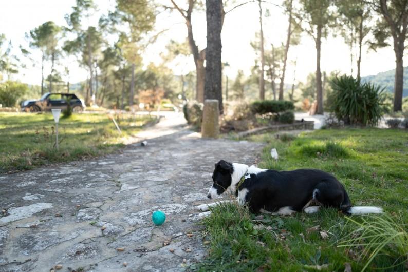 Location de vacances - Gîte à Pernes-les-Fontaines - Notre chienne border Colie Oumaï