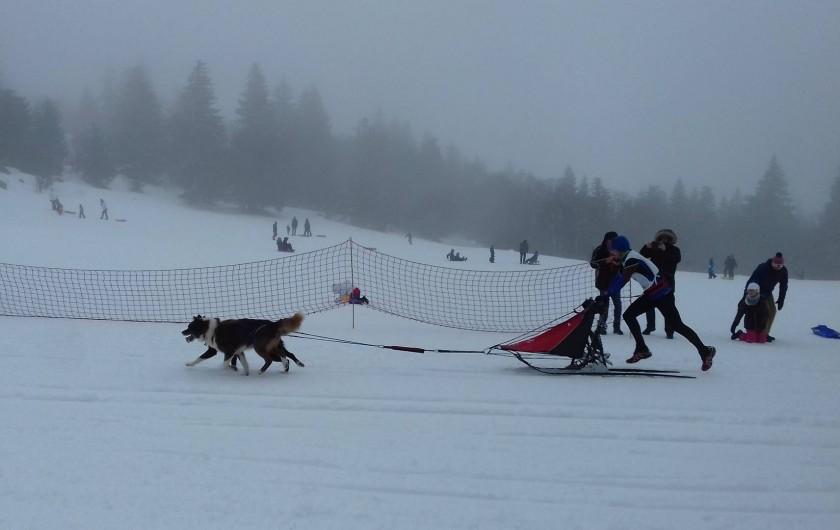 Location de vacances - Appartement à Orbey - course de chien de traîneau auberge du blancrupt