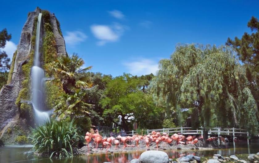 Location de vacances - Villa à La Palmyre - Zoo de la Palmyre