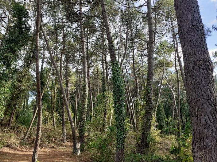 Location de vacances - Bungalow - Mobilhome à Camiers - Forêt, réserve naturelle national de la Canche