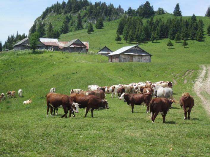 Location de vacances - Chalet à Bellevaux - Alpages de  Tré  le Saix  superbe rando