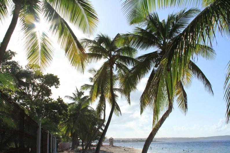 Location de vacances - Studio à Le Moule - La plage de L'Autre Bord située à quelques 20 pas du studio... Profitez