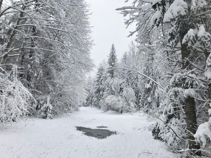 Location de vacances - Appartement à Samoëns - Forêt voisine en hiver