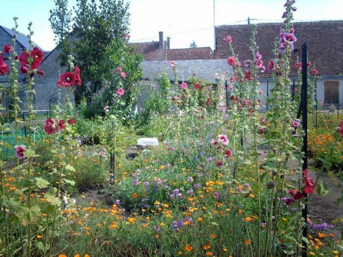 Location de vacances - Gîte à Pontlevoy - les roses trémières multicolores et le jardin fleuri où il fait bon flâner