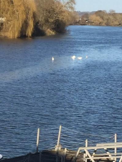 Location de vacances - Gîte à Vignonet - Dordogne