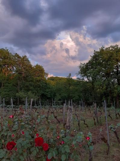 Location de vacances - Gîte à Mechmont - notre petite vigne