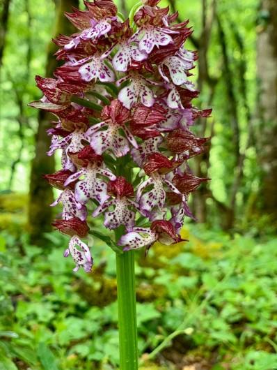 Location de vacances - Gîte à Mechmont - belle orchidée