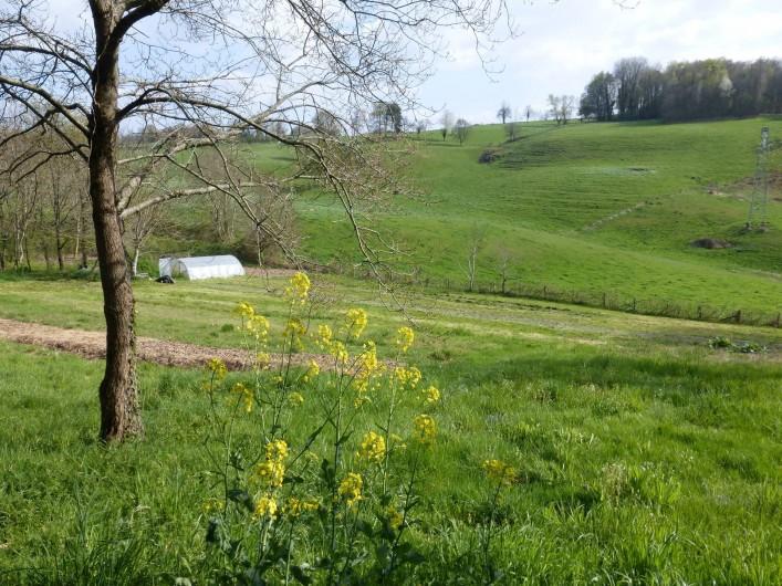 Location de vacances - Gîte à Saint-Hilaire-Peyroux - notre champ en permaculture (ni engrais ni pesticide)